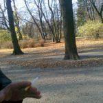 Obraz do wpisu: 11/11/11 wystawa fotografii  #2