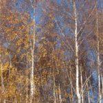 Obraz do wpisu: 11/11/11 wystawa fotografii  #3